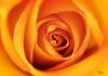 Blüte gelb 2