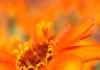 Blüte gelb 3